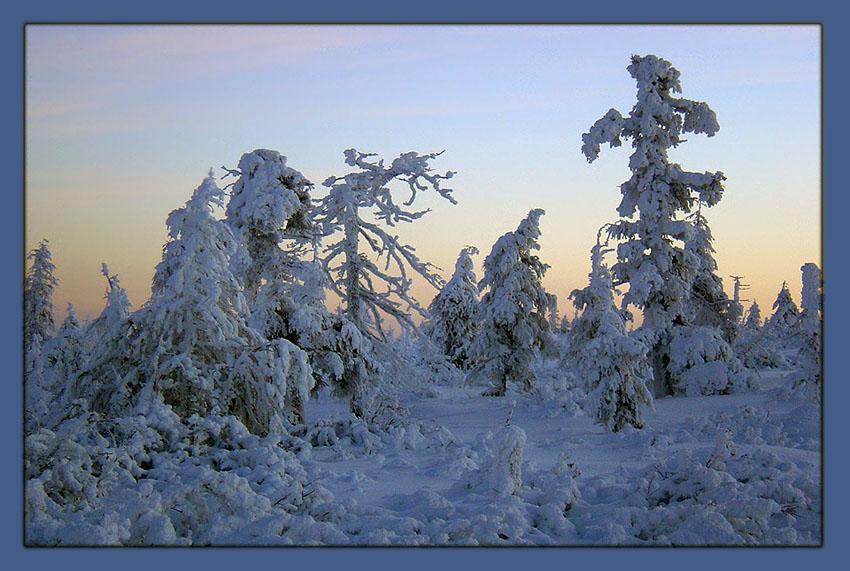 "фото ""Заколдованный лес"" метки: пейзаж, зима, лес"