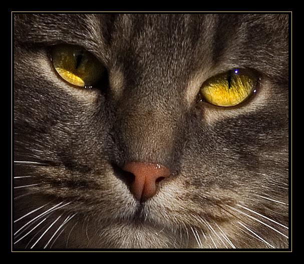 """фото """"Взгляд..."""" метки: природа, портрет, домашние животные"""