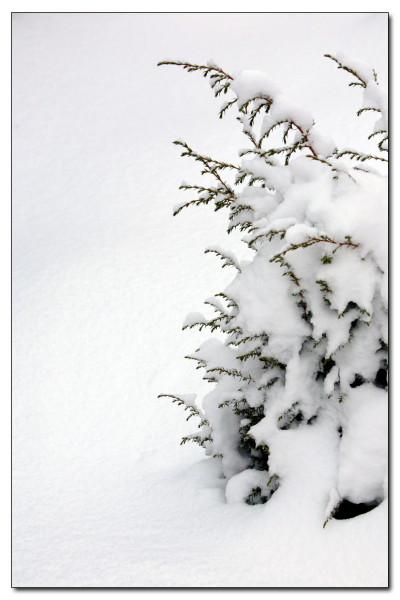 "фото ""Скучно..."" метки: пейзаж, зима"