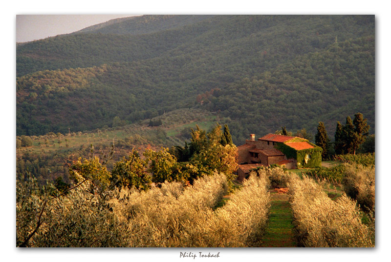 """фото """"Долина Кьянти"""" метки: пейзаж, лето"""