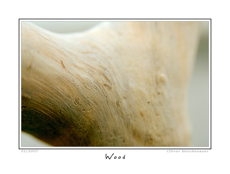 "photo ""Wood"" tags: nature, macro and close-up, flowers"