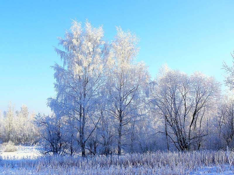 """фото """"зимний лес"""" метки: пейзаж, зима"""