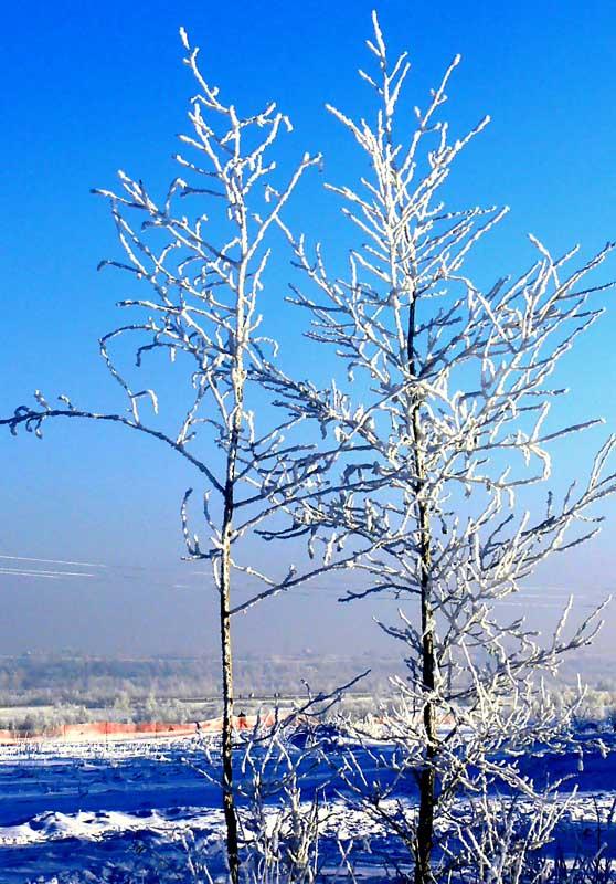 """фото """"хрустальные деревья"""" метки: пейзаж, зима"""