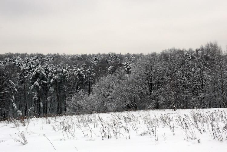 "фото ""После снегопада"" метки: природа,"