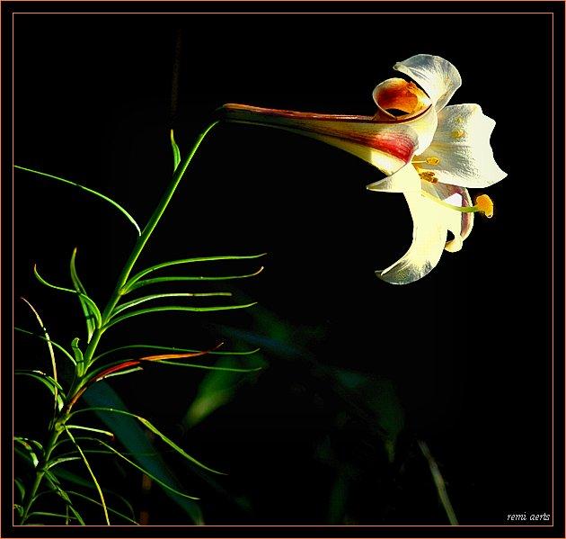 """фото """"a flower for you"""" метки: природа, макро и крупный план, цветы"""