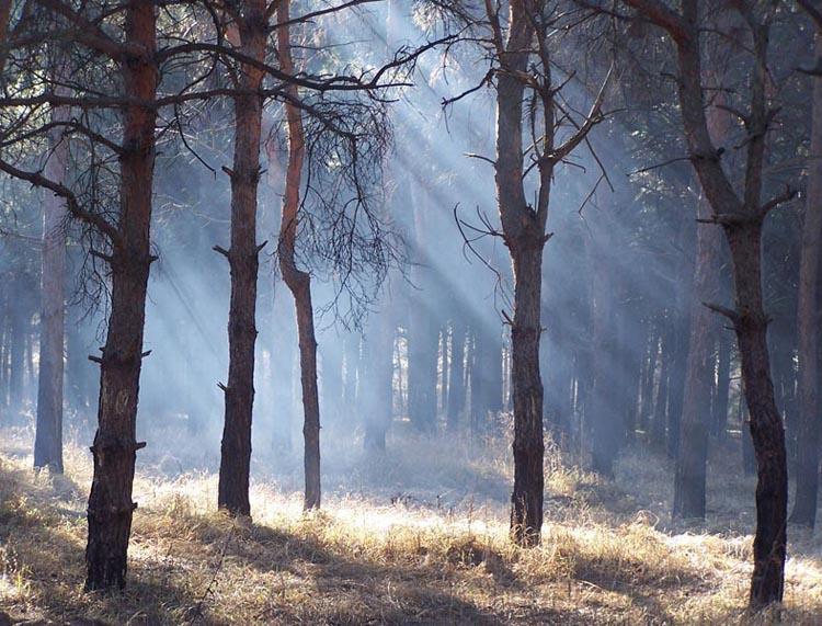 """фото """"Утренний лес"""" метки: пейзаж, лес"""