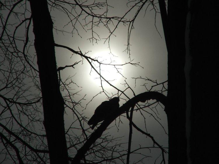 "фото ""Sun at foggy winter day"" метки: пейзаж, природа, дикие животные, зима"