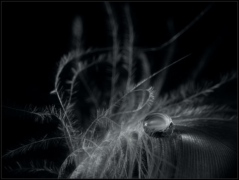 "photo ""O"" tags: still life, macro and close-up,"