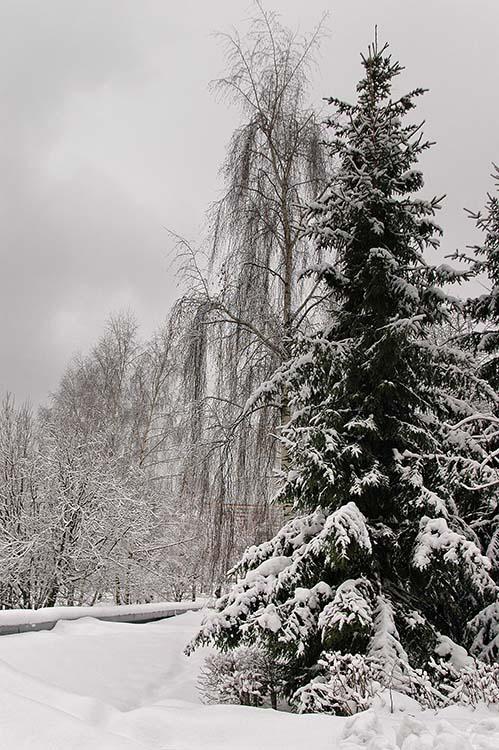 """фото """"Это был полдень"""" метки: пейзаж, зима"""