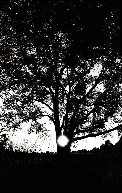 "фото ""oak&sun"" метки: пейзаж, лес, лето"