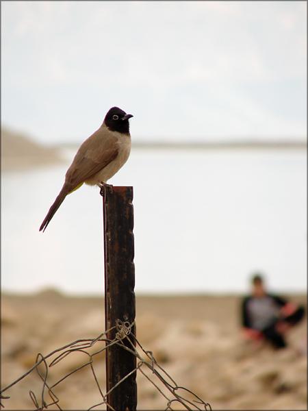 """фото """"Слушатель"""" метки: природа, дикие животные"""