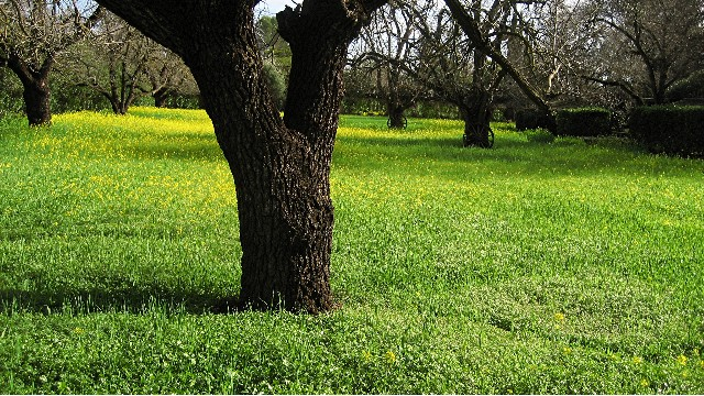 "фото ""***"" метки: пейзаж, весна"