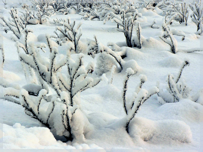"фото ""...winter story..."" метки: пейзаж, природа, зима, цветы"