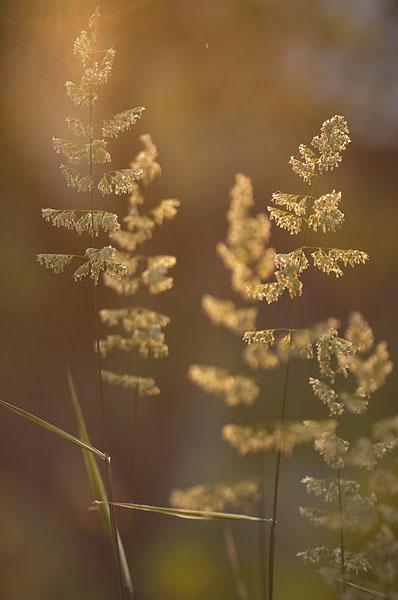 """фото """"%"""" метки: природа, цветы"""