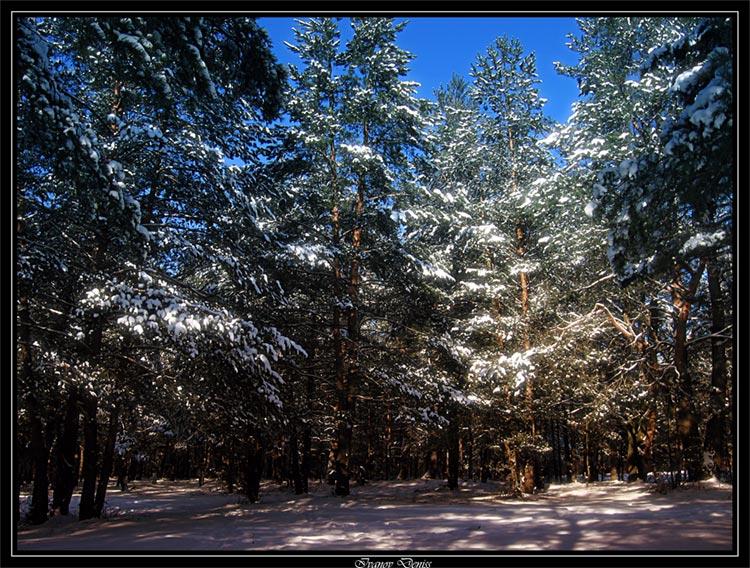 """фото """"Зимняя сказка"""" метки: пейзаж, зима, лес"""