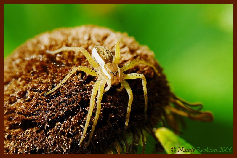 """фото """"Солнечные ванны"""" метки: природа, макро и крупный план, насекомое"""