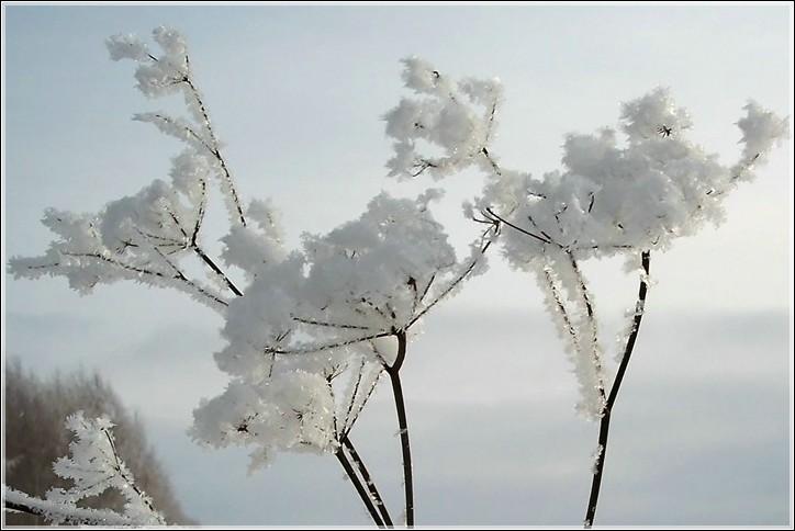 """фото """"* * *"""" метки: пейзаж, природа, зима, цветы"""