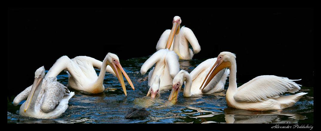 """фото """"панорама раздора"""" метки: панорама, природа, дикие животные"""