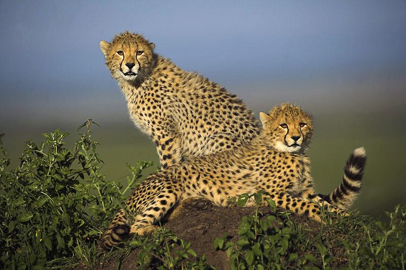 """фото """"детишки.."""" метки: природа, путешествия, Африка, дикие животные"""