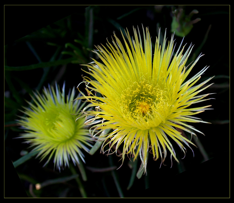 "photo ""Two stars"" tags: nature, macro and close-up, flowers"