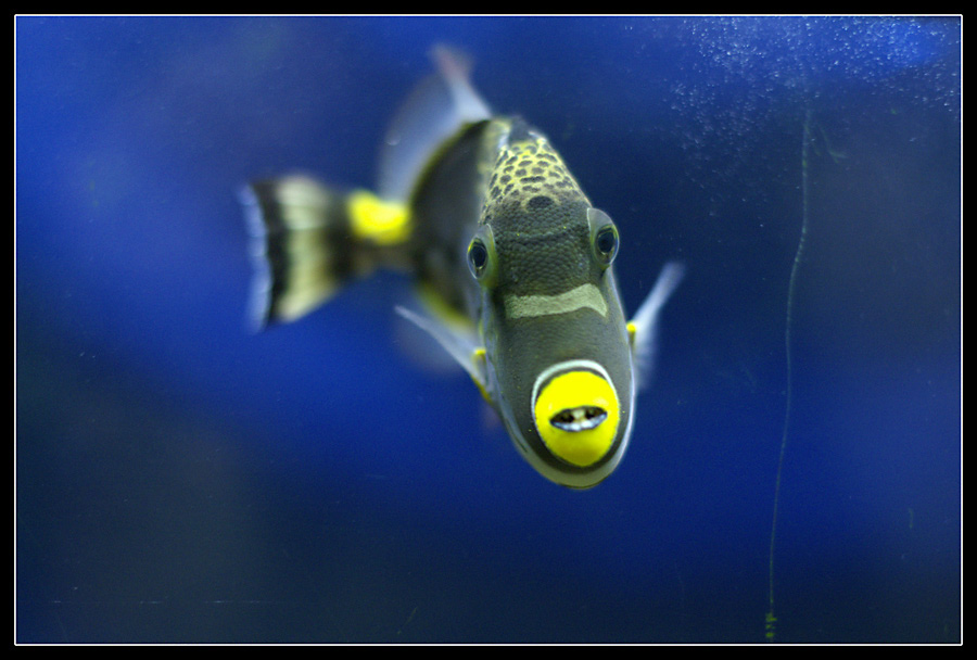 "photo ""Face to face"" tags: nature, underwater,"