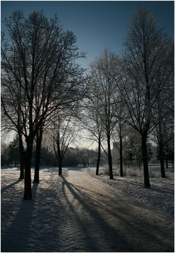 "photo ""Winter: sunny day"" tags: landscape, winter"