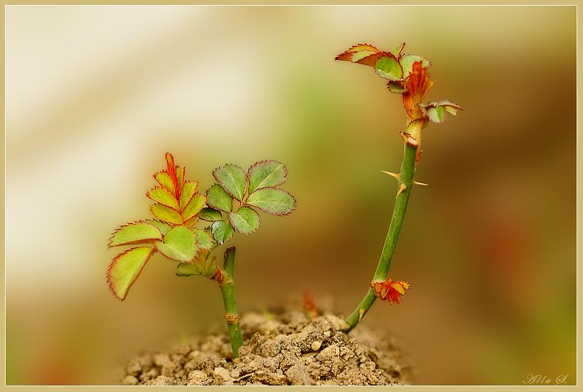 """фото """"Пробуждение весны"""" метки: природа, цветы"""
