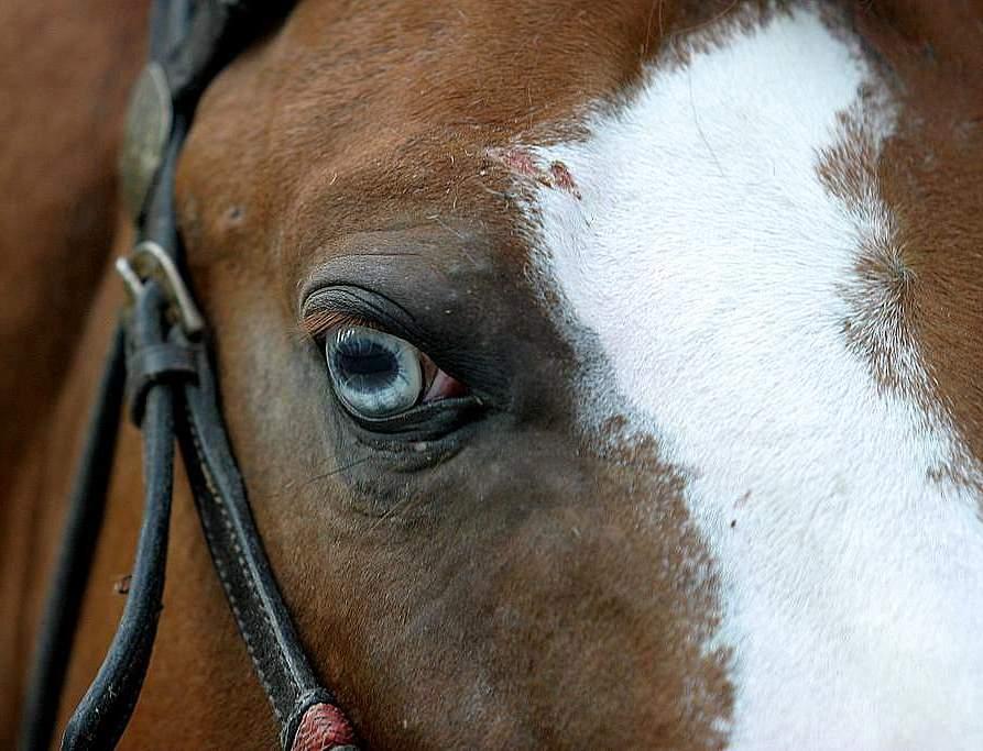 "photo ""quarter mile horse"" tags: nature, pets/farm animals"