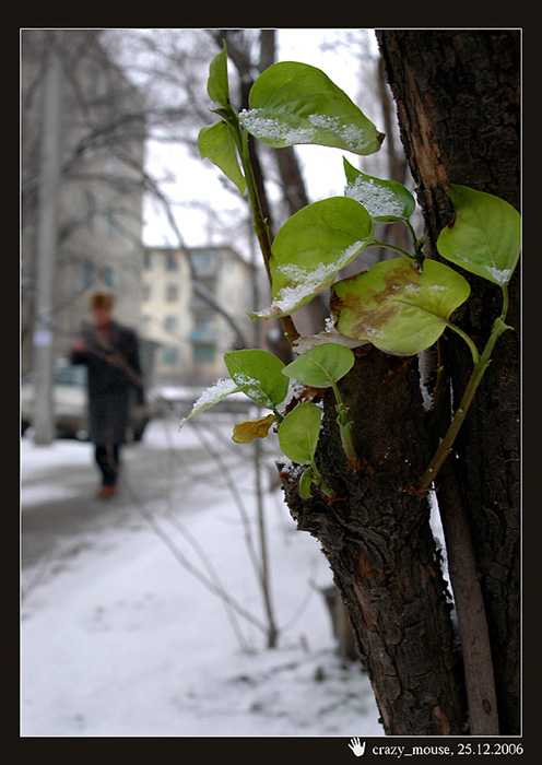 "photo ""Winter in Stalingrad"" tags: landscape, misc., winter"