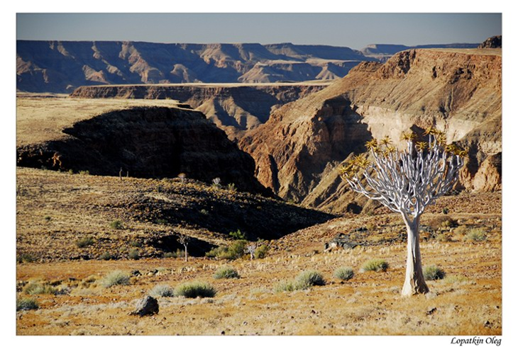 "photo ""Quiver tree and Fish River Canyon"" tags: landscape, travel, Africa"