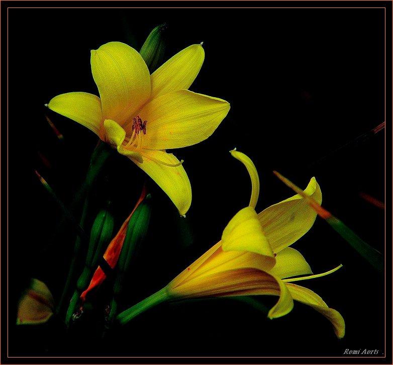 "фото ""for every girl a flower"" метки: природа, цветы"
