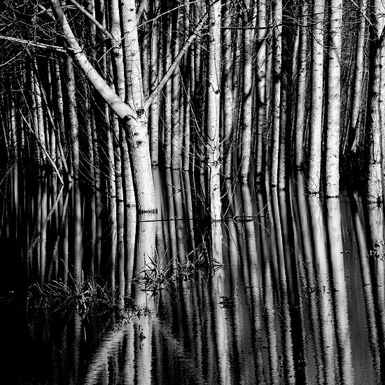 """фото """"Trees"""" метки: черно-белые, природа, цветы"""