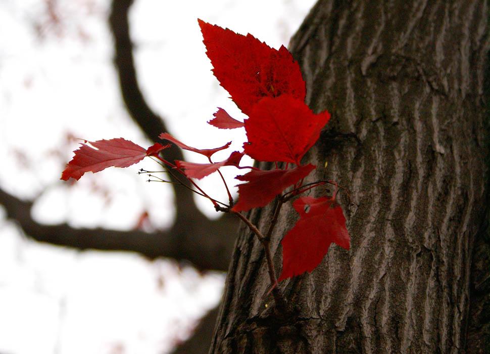 """фото """"Осенние листочки"""" метки: природа, цветы"""