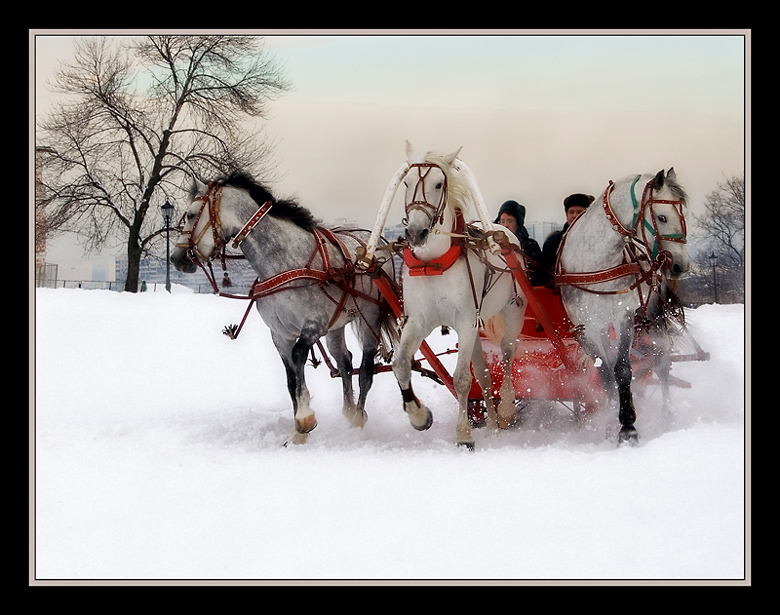 "photo ""Three white horses"" tags: genre, nature, pets/farm animals"