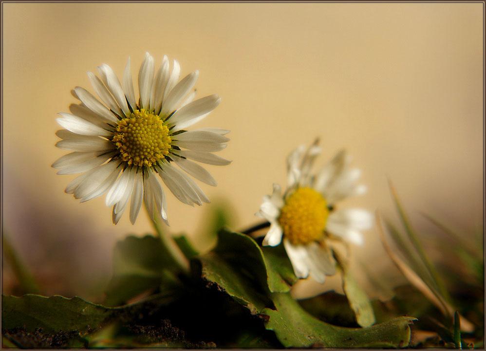 """фото """"***"""" метки: природа, макро и крупный план, цветы"""