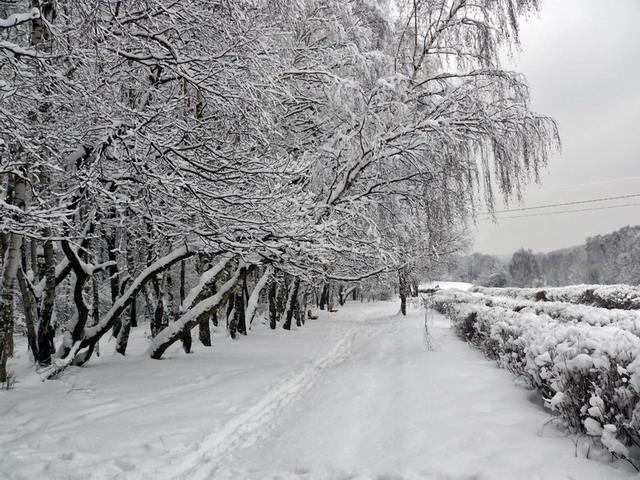 "фото ""Графика Зимы"" метки: природа, пейзаж, зима"