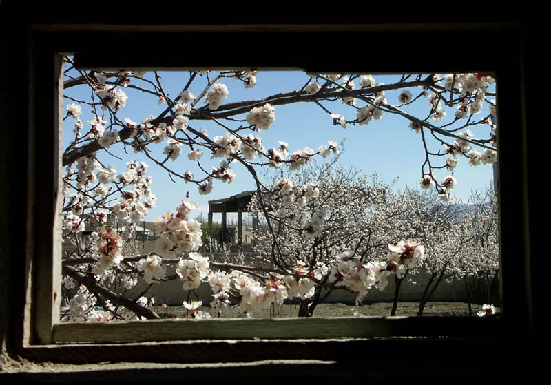 """фото """"Окно в Весну.... (весенняя 5)..."""" метки: пейзаж, природа, весна, цветы"""