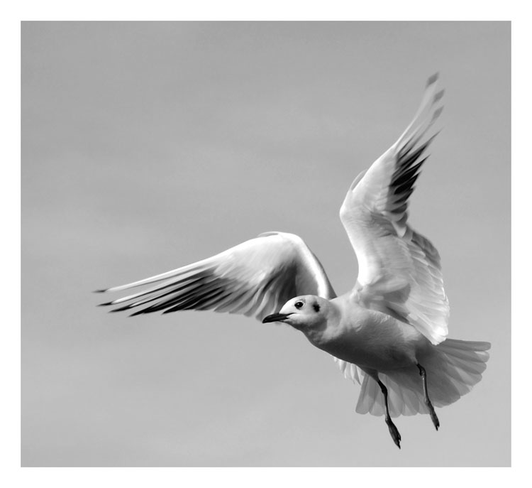 "photo ""bird"" tags: nature, black&white, wild animals"