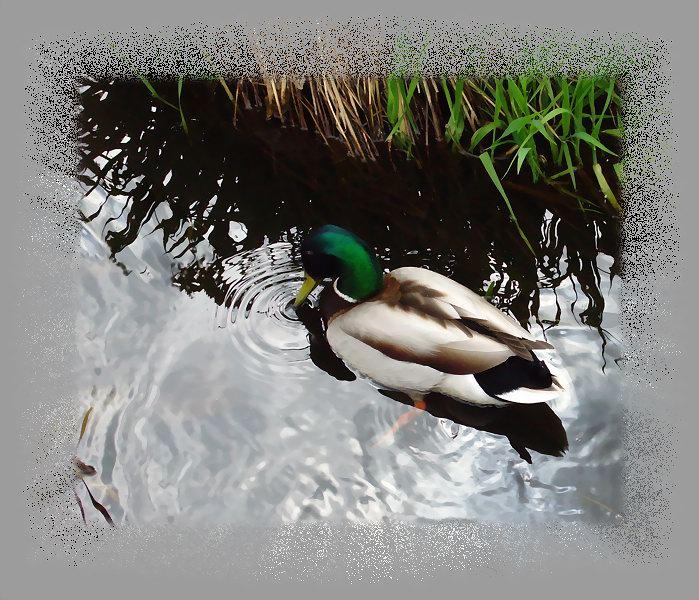 """фото """"Задумчивость"""" метки: природа, дикие животные"""
