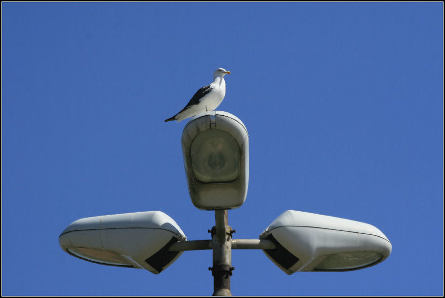 "фото ""Street Lamps 29/29"" метки: архитектура, пейзаж,"