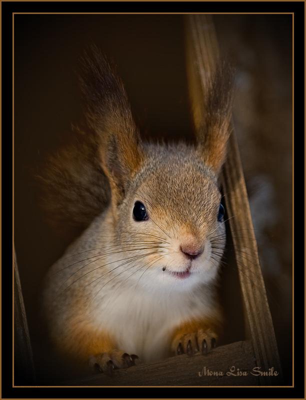"""фото """"Mona Lisa Smile"""" метки: природа, дикие животные"""