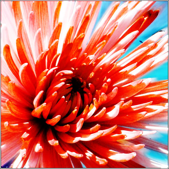 """фото """"The Fire"""" метки: природа, макро и крупный план, цветы"""