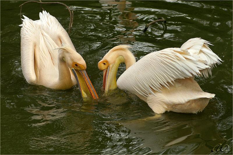 """фото """"Рыбалка"""" метки: природа, дикие животные"""