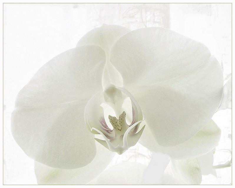 """фото """"В высоком ключе..."""" метки: природа, макро и крупный план, цветы"""