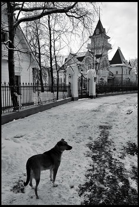 """фото """"жизнь собачья (на Каменном острове)"""" метки: природа, домашние животные"""