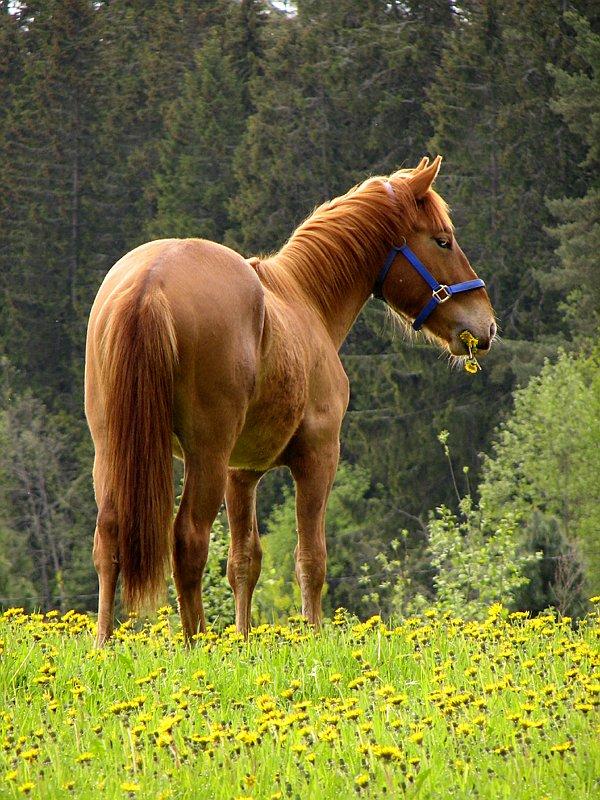 """фото """"Flowers... I just love 'em!"""" метки: пейзаж, природа, домашние животные, лето"""