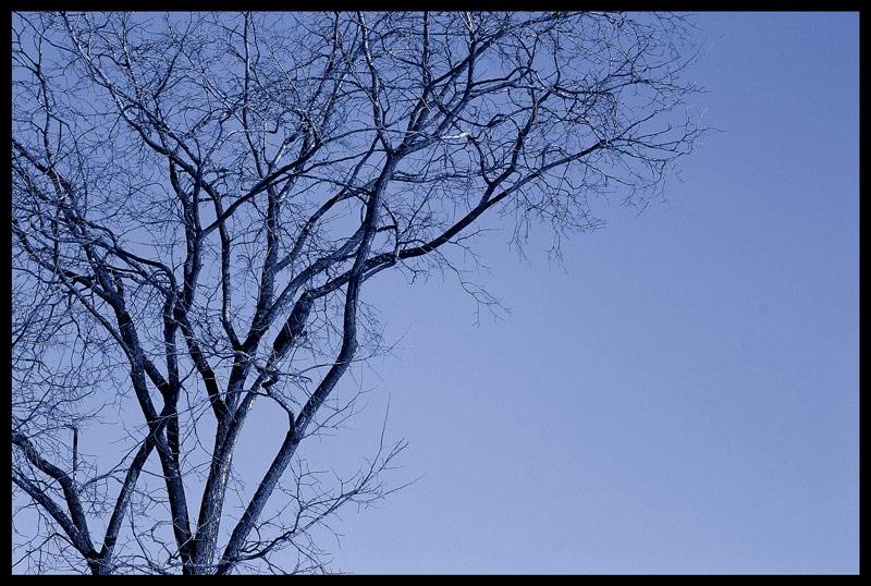 "фото ""***"" метки: пейзаж, весна, лес"