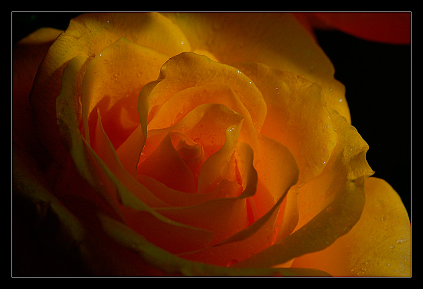 "photo ""Solar luminescence"" tags: nature, flowers"