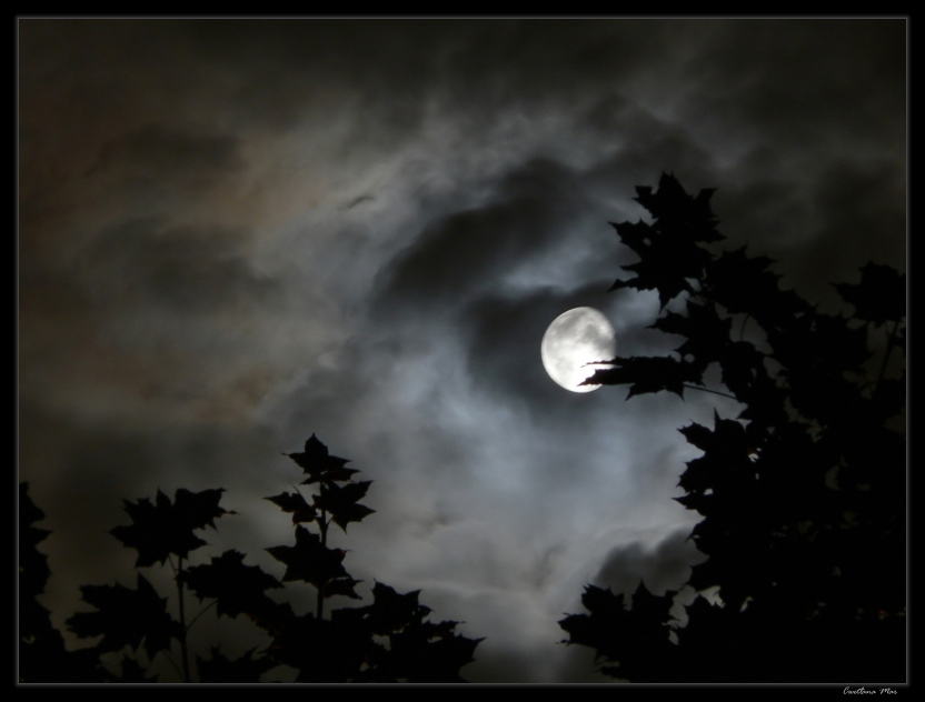 "фото ""Лунная соната"" метки: пейзаж,"