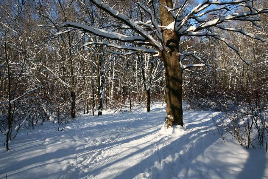 """photo """"Net"""" tags: landscape, nature, flowers, winter"""
